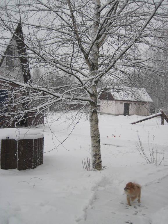 про снег и колготки