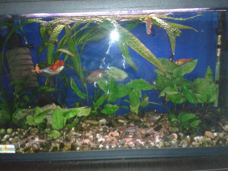 Скачать звук пузырьков в аквариуме