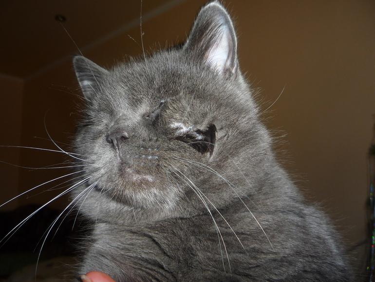 Гной в щеках у кота