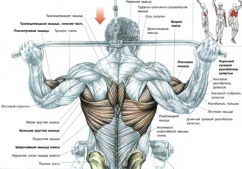 """Марафон """"Сам себе тренер"""" - тренировка женской спины (тяга с верхнего блока за голову)"""