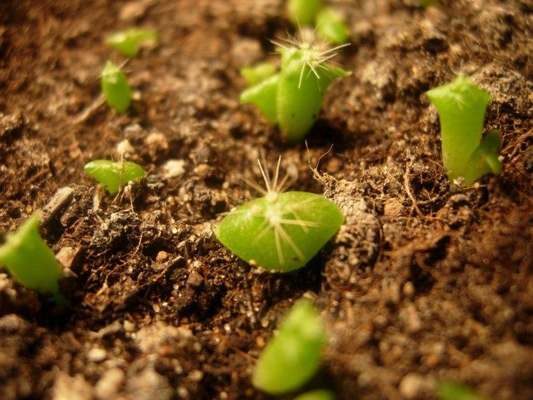 Когда сажать семена суккулентов 765