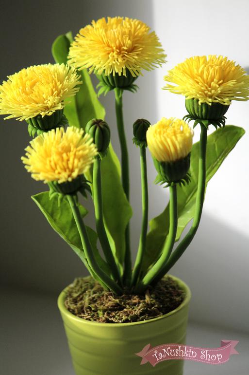 Как вырастить кормовые растения в домашних условиях?