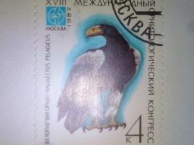 Марка 4к 1982 год СССР Белоплечий Орлан