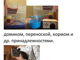 Продается Шиншилла (2 месяца, девочка) + клетка.