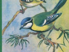 Птицы русского леса. Набор из 16 открыток
