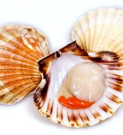 Морской гребешок на раковине 1кг