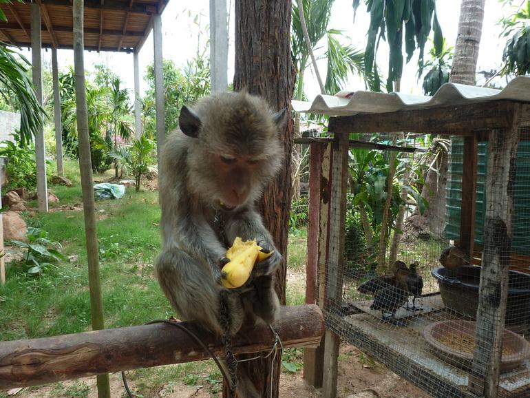 Смотреть фотографии обезьян любительское 27 фотография