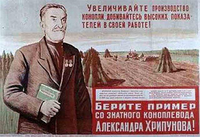 Множество неизвестных и неожиданных фактов о конопле и почему Сталин считал коноплю равной пшенице и подсолнечнику.