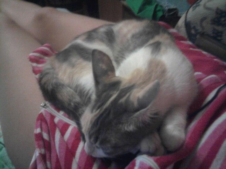 Почему кот прыгает на живот беременной 62