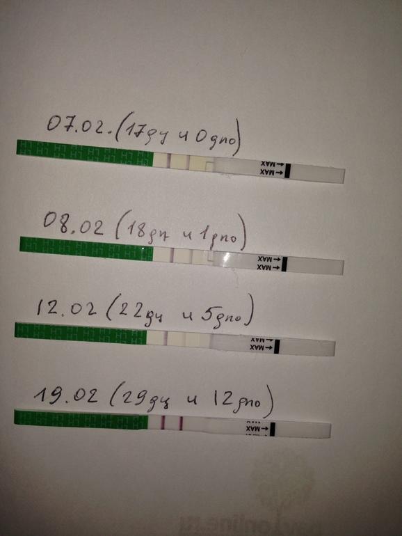 По тесту на овуляцию можно определить беременность по