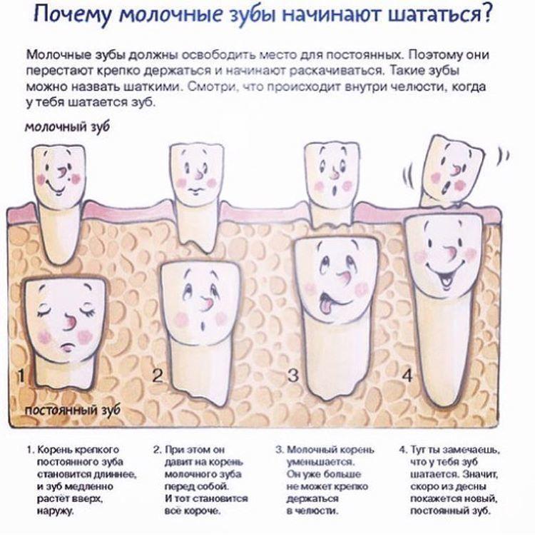Можно ли расшатывать молочный зуб
