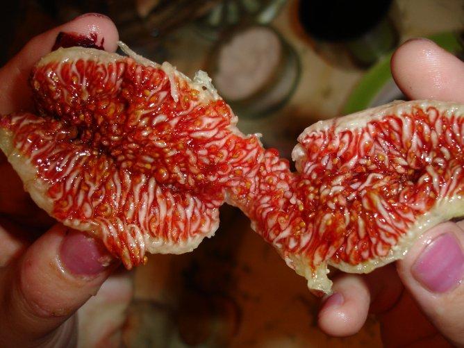 фрукт инжир