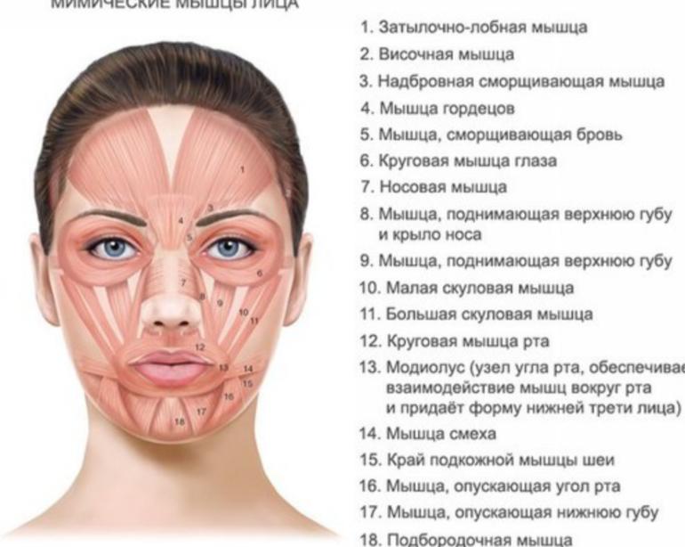 боксеры проявление гипертонуса лицевых мышц ее, получаем