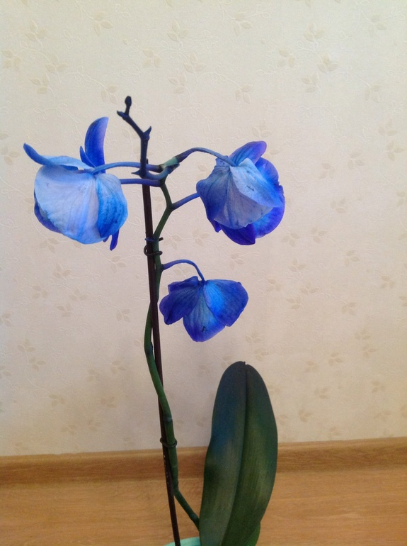 Завяли цветы у орхидеи что делать