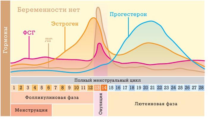 Гормоны цикла - запись пользователя Анюта Рожу здорового малыша (id2489959) в дневнике - Babyblog.ru