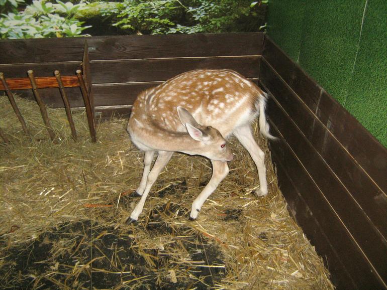 Контактный зоопарк на ВДНХ