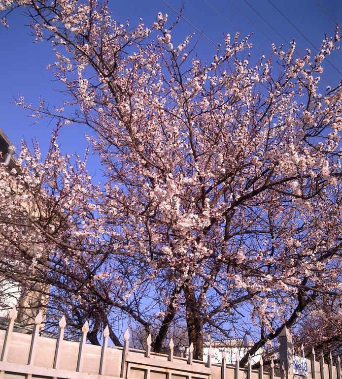 ВСЁ! Началось! Весна!