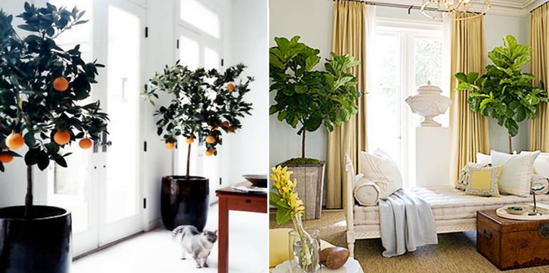 Вьющиеся растения в интерьер