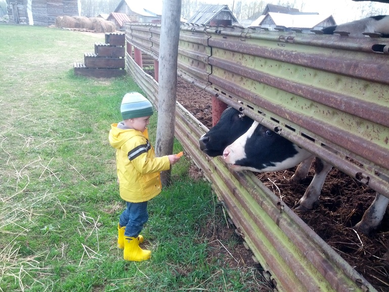 ферма веселое подворье