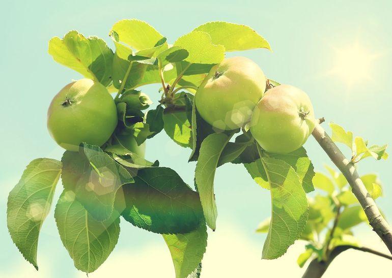 ТН Деревья. День третий, плодово-ягодный, он же заключительный.