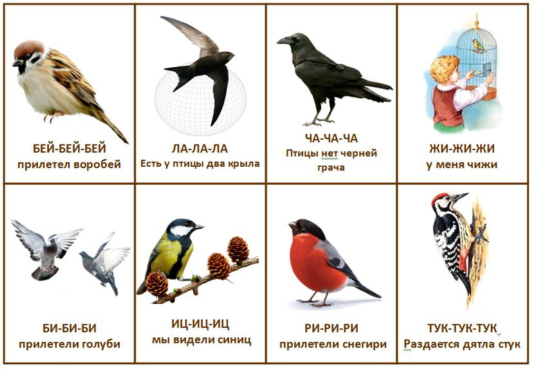 окружающий мир знакомство с птицами