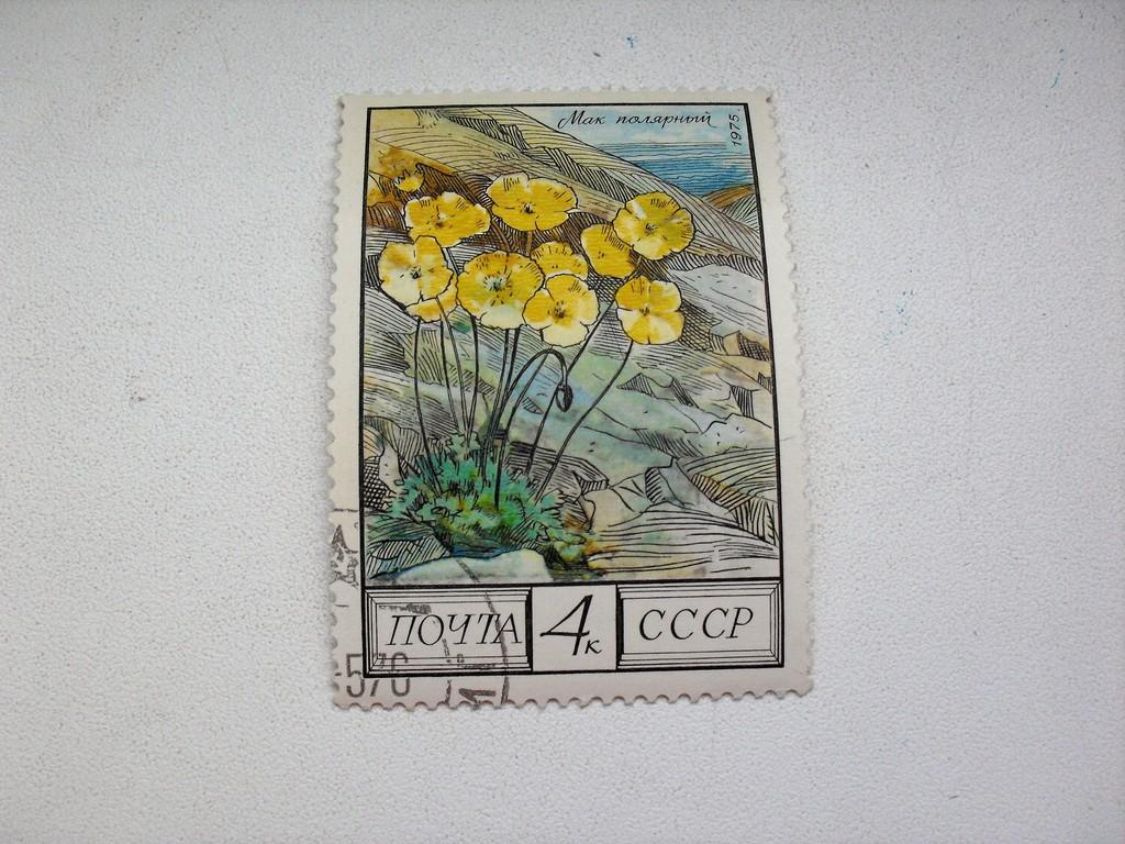 Марка 4к 1975 год СССР Мак полярный