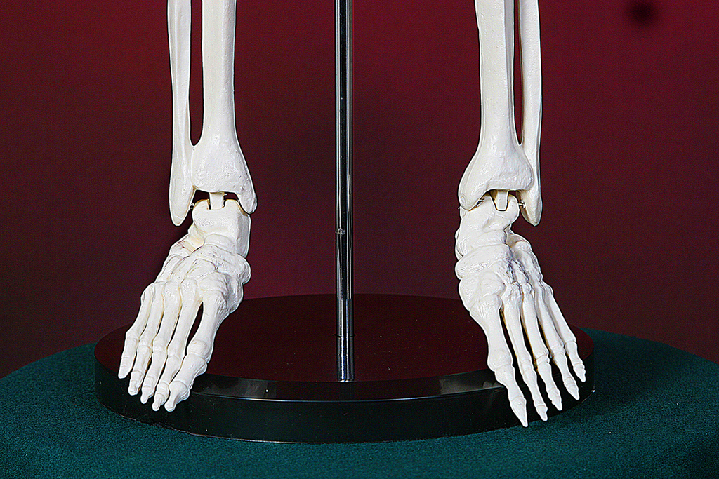 Модель скелета человека на штативе 85 см - Новый
