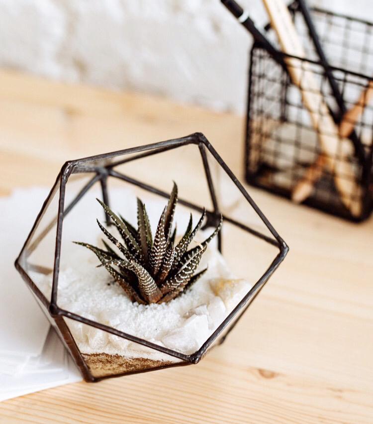 🌿Мини-флорариум с красивым суккулентом