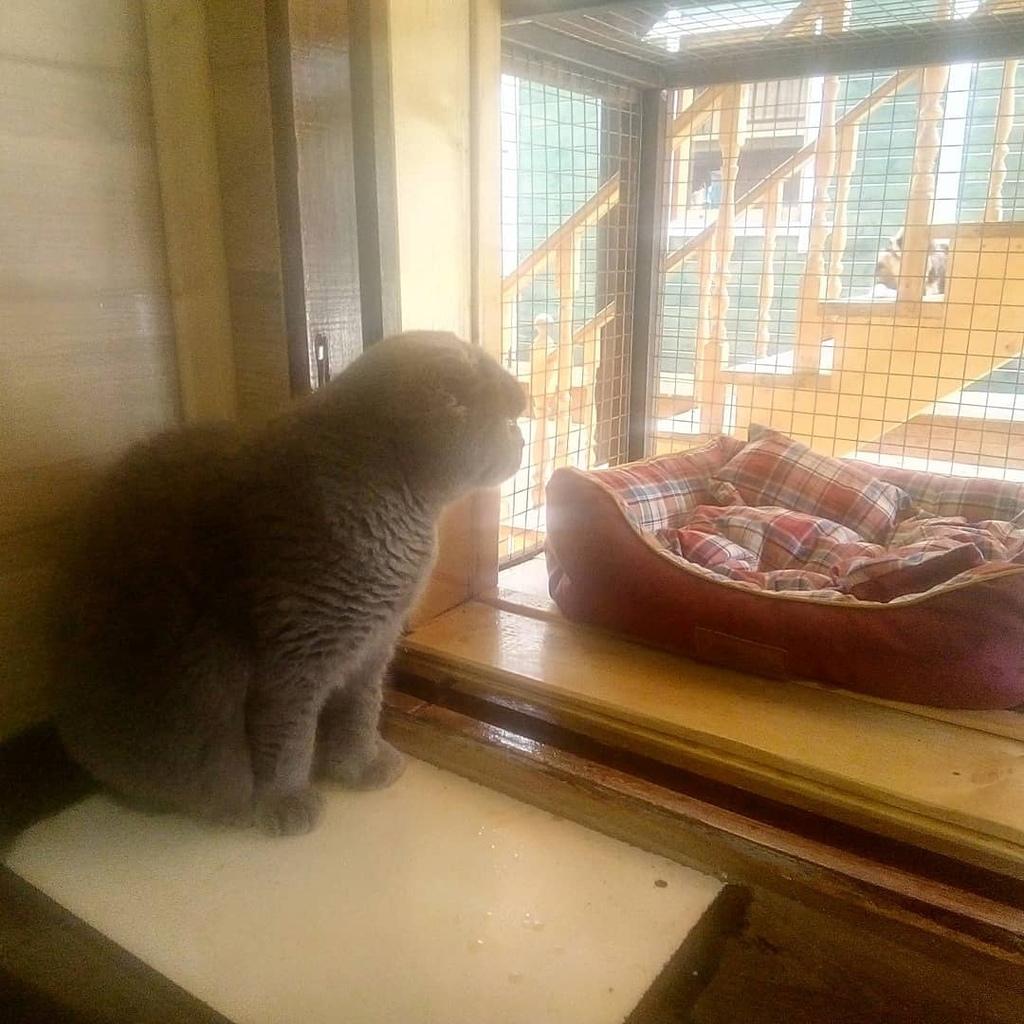 Гостиница для кошек и котов ЭтноКот