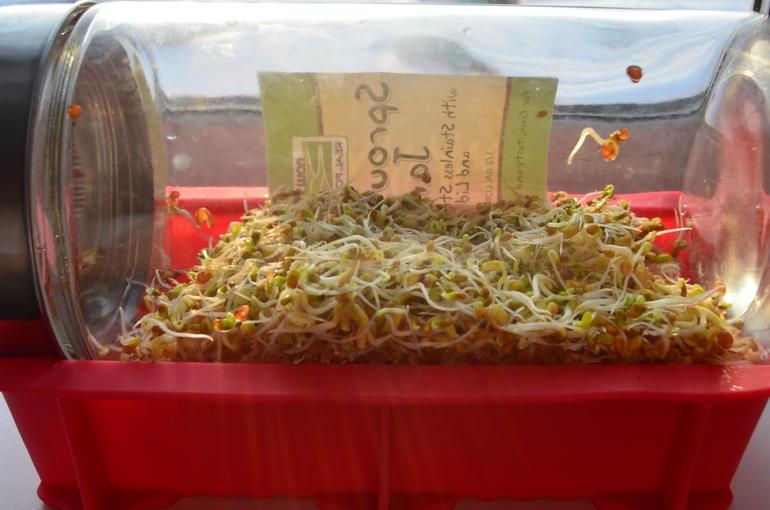 Днем радио, открытка с семенами для проращивания