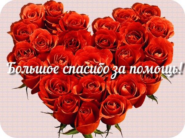 https://cdn5.imgbb.ru/community/90/902985/201511/a12dfb6fd7b888c83b6a32f2f729075f.jpg