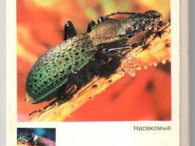 Экскурсия в природу. Насекомые. Жуки (24 из 25)