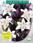 Лилия Black and White Asiatic Mix 3 шт.