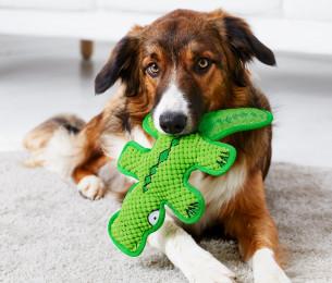 Hunde-Plüschspielzeug