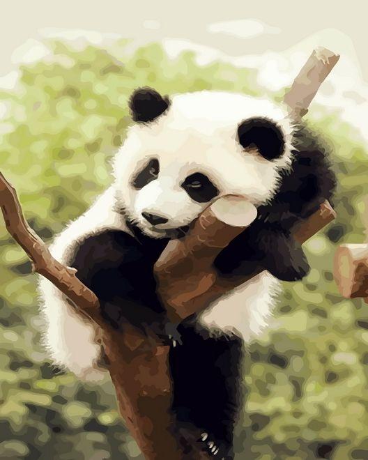 Картинки, картинки красивые с пандой