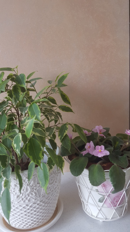 Пост о цветах