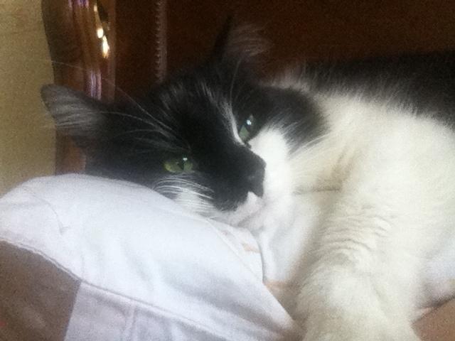 Кота пришлось усыпить