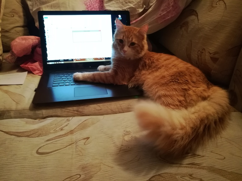 Почему кот много писает