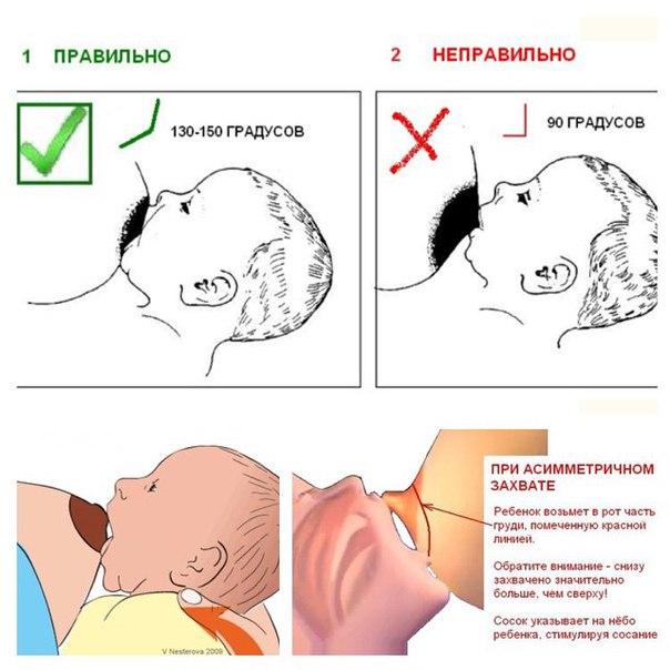 правильно как сосать малыша грудь научить