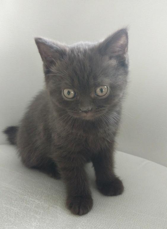 1fa086950566 Как мы выбирали кличку коту... - запись пользователя Екатерина ...
