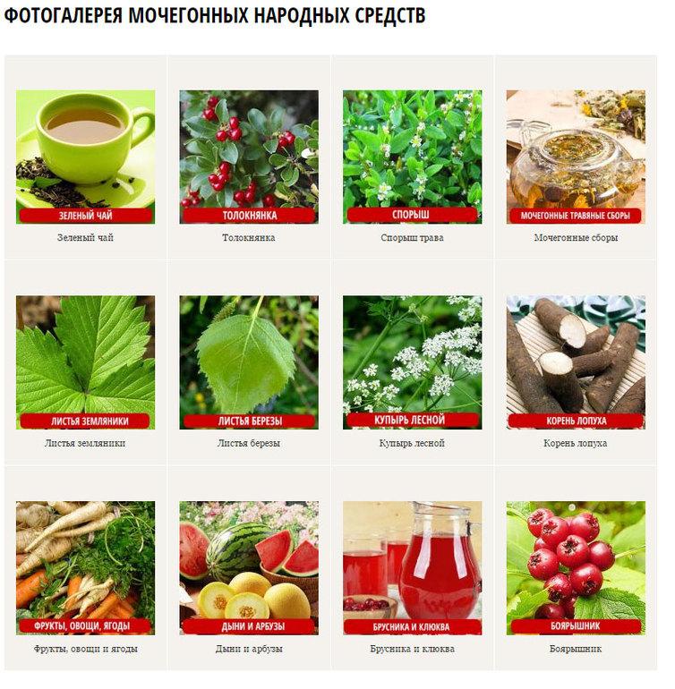 мочегонные травы для похудения список лучших